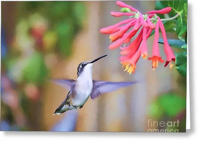 Wild Birds - Hummingbird Art Greeting Card