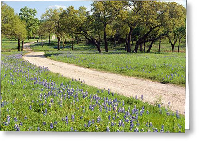 Wild Blue Bonnets, Spring In Rural Texas Greeting Card by Panoramic Images