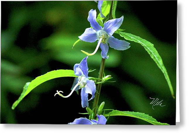 Wild Blue Flowers Greeting Card