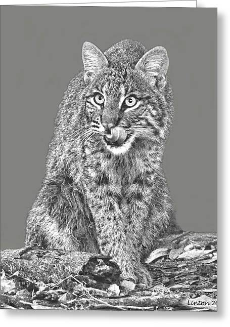 Wild Bobcat Greeting Card by Larry Linton