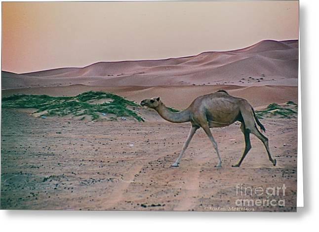 Greeting Card featuring the photograph Wild Camel by Charles McKelroy