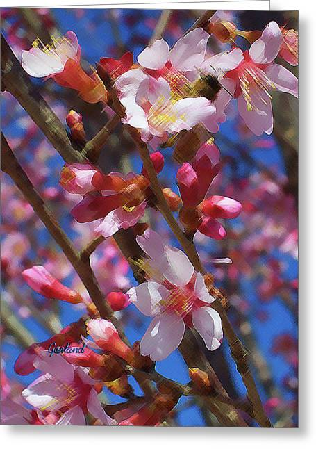 Wild Cherry Tree In Bloom Greeting Card by Garland Johnson