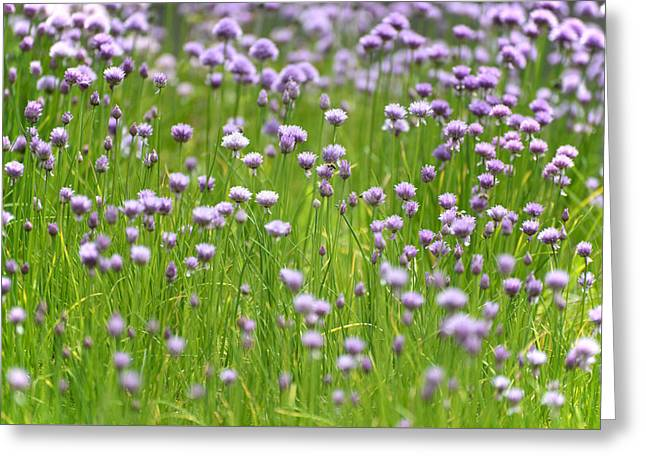 Wild Chives Greeting Card by Chevy Fleet