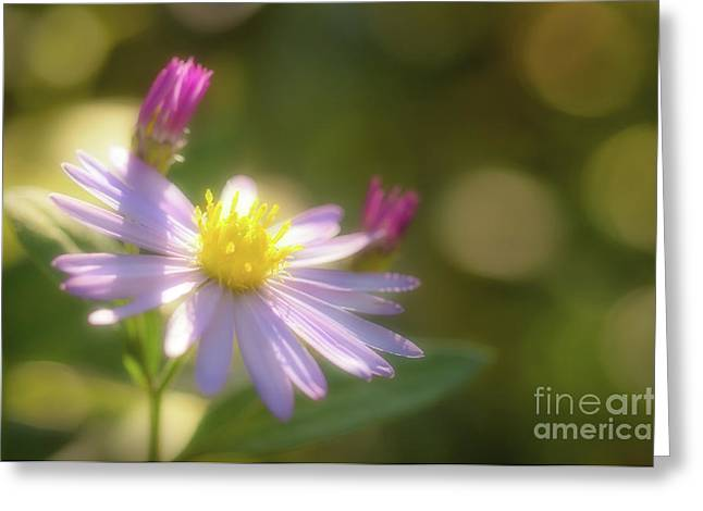Greeting Card featuring the photograph Wild Chrysanthemum by Tatsuya Atarashi