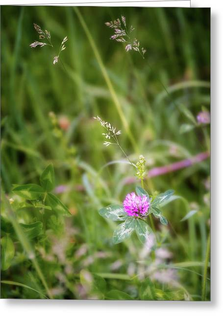 Wild Clover Greeting Card