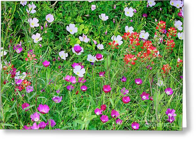 Greeting Card featuring the photograph Wild Color Patch by Charles McKelroy