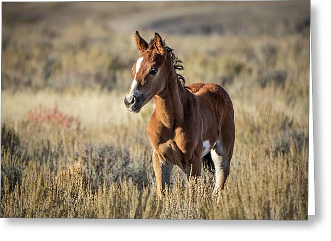 Wild Colt In Sand Wash Basin - Northwest Colorado Greeting Card
