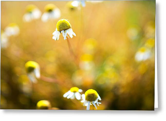 Wild Daisy Illusions Greeting Card by Ron Day
