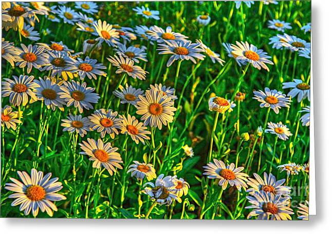 Wild Daisy Greeting Card by Robert Pearson