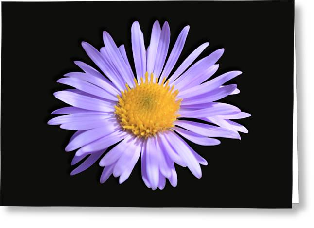 Greeting Card featuring the photograph Wild Daisy by Shane Bechler