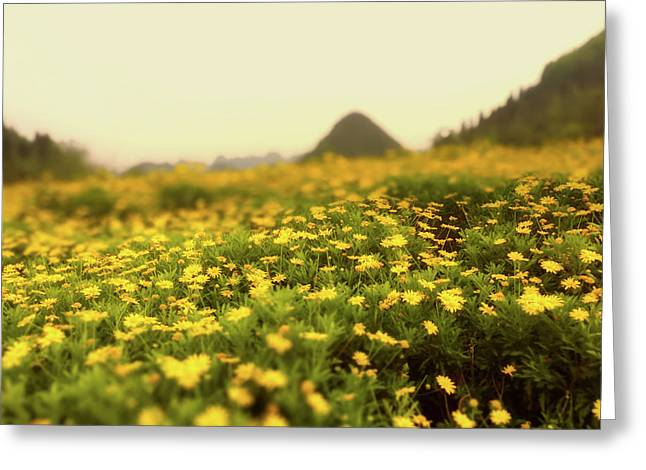 Wild Dandelions - China Greeting Card