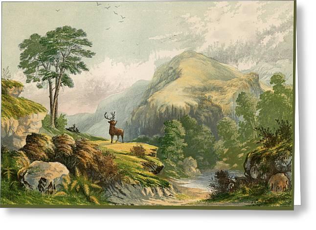 Wild Deer Greeting Card by Alexander Francis Lydon