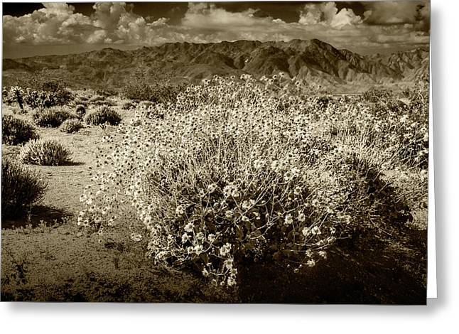 Greeting Card featuring the photograph Wild Desert Flowers Blooming In Sepia Tone  by Randall Nyhof