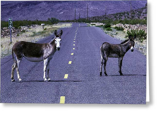 Wild Donkeys On Road To Oatman Greeting Card by Garry Gay