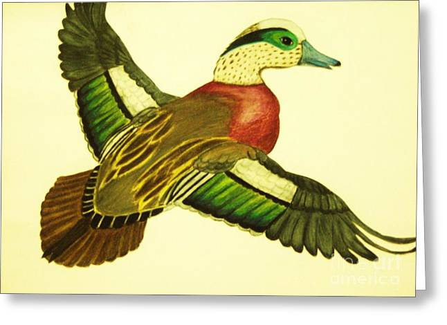 Wild Duck Greeting Card by Jamey Balester
