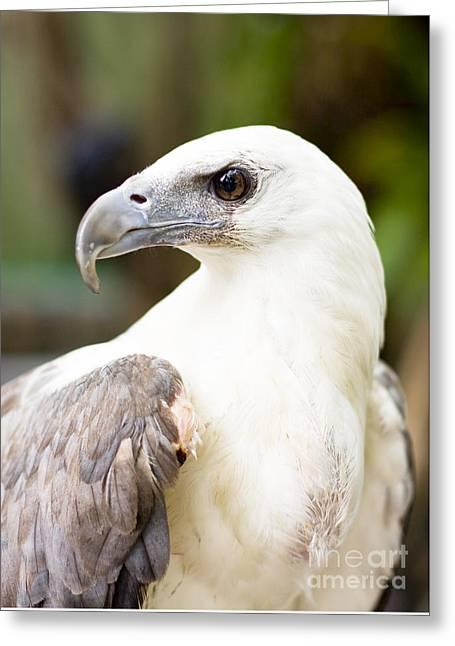 Wild Eagle Greeting Card
