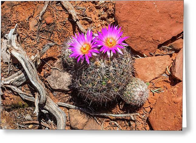 Wild Eyed Cactus Greeting Card