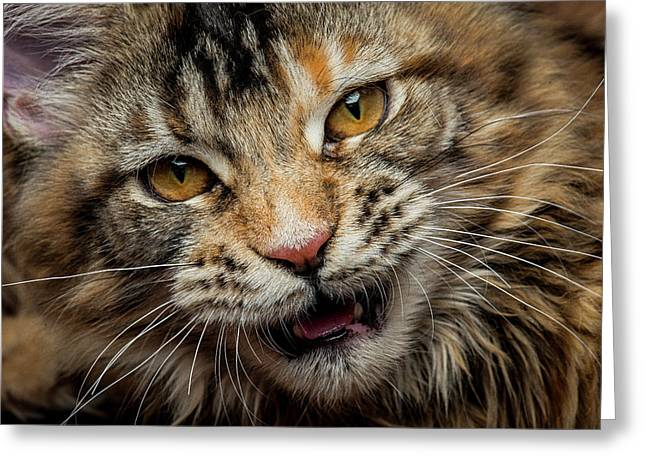 Greeting Card featuring the photograph Wild Face by Robert Sijka