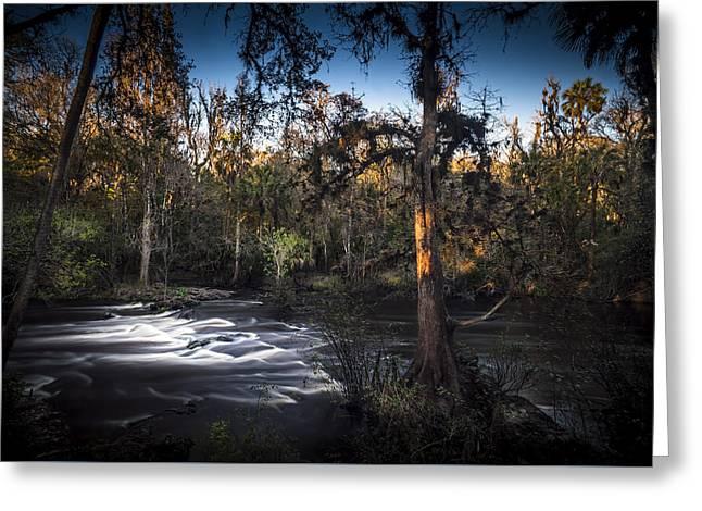 Wild Florida Greeting Card