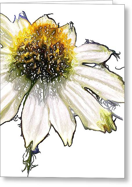 Greeting Card featuring the photograph Wild Flower Five  by Heidi Smith