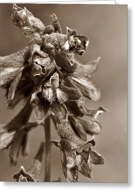 Wild Flower In Sepia Greeting Card by Mario Brenes Simon