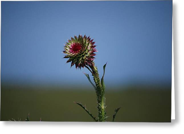 Wild Flower Greeting Card by John Roncinske