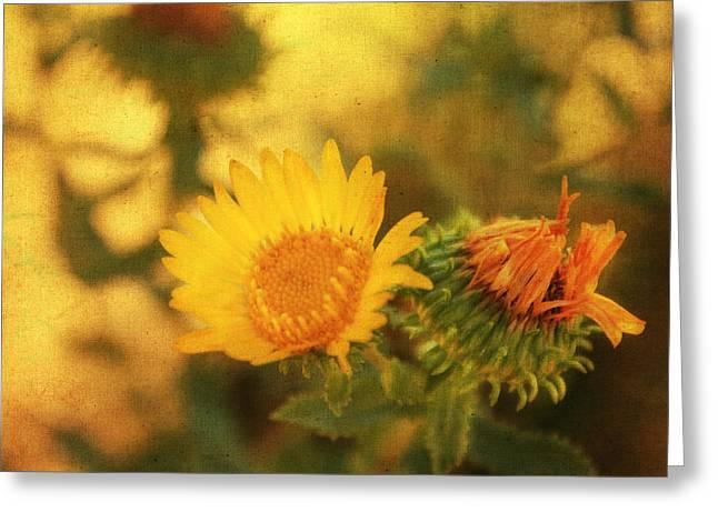 Wild Flower Greeting Card by Julie Hamilton