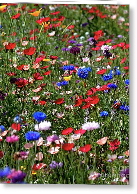 Wild Flower Meadow 2 Greeting Card