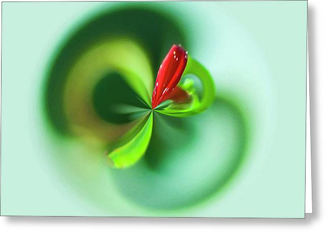 Greeting Card featuring the photograph Wild Flower Orb by Bill Barber