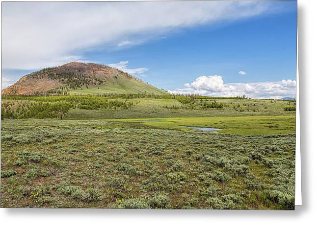 Greeting Card featuring the photograph Wild Flowers And Grasses At Yellowstone by John M Bailey