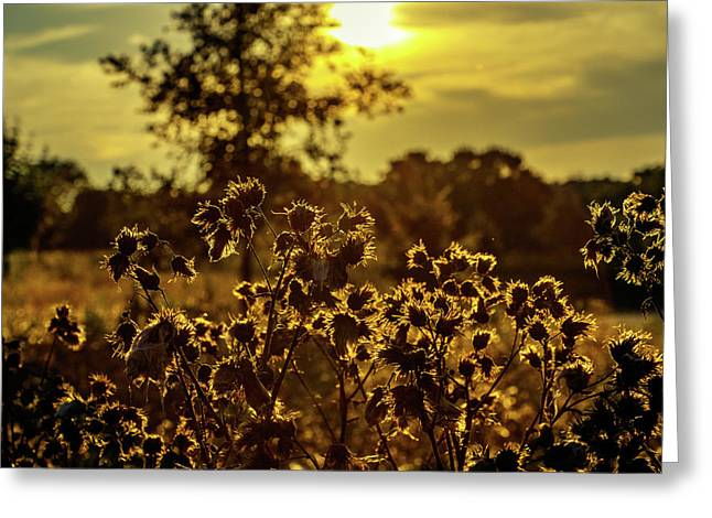 Wild Flowers And Sun Beams Greeting Card