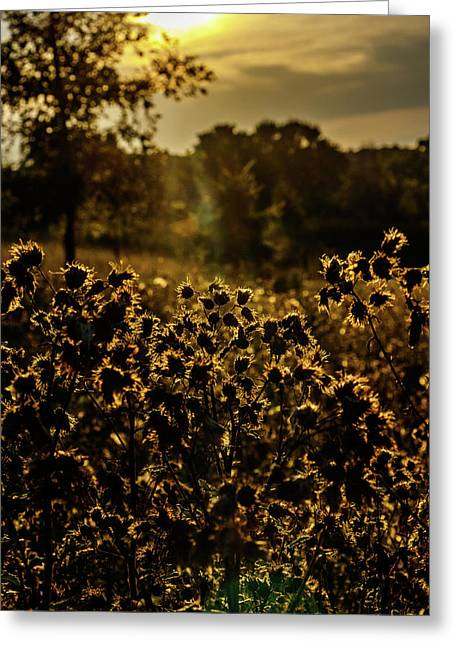 Wild Flowers And Sun Beams Portrait Greeting Card