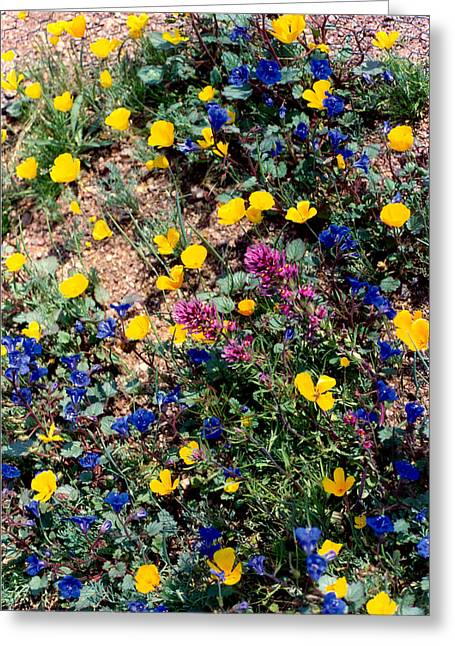Wild Flowers Greeting Card by Eliot LeBow