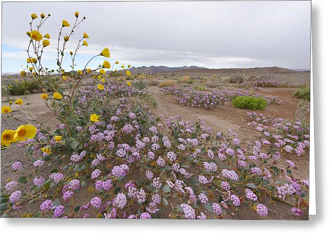 Greeting Card featuring the photograph Wild Flowers In Death Valley by Dung Ma