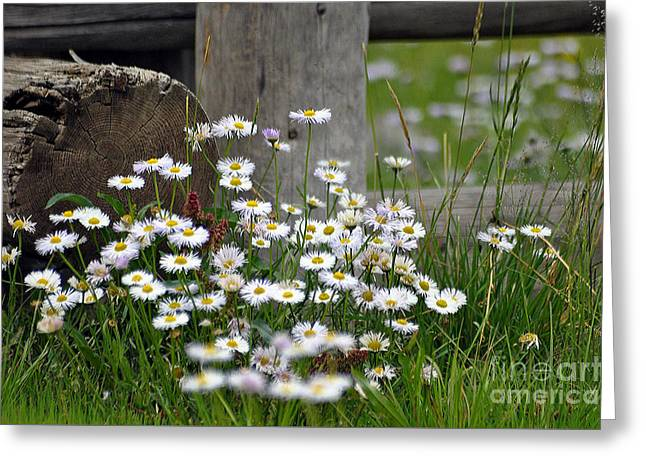 Wild Flowers  Greeting Card by Juls Adams