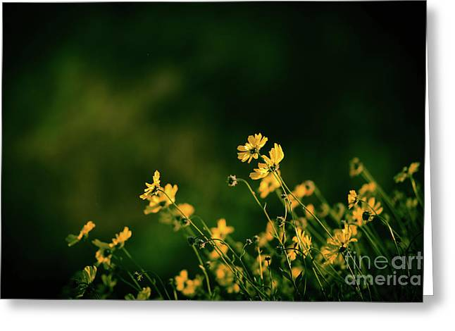 Greeting Card featuring the photograph Evening Wild Flowers by Kelly Wade