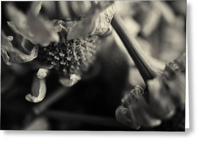Wild Flowers Greeting Card by Nicole Frischlich