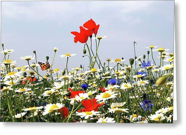 Wild Flowers Number Two Greeting Card by Mark Rogan