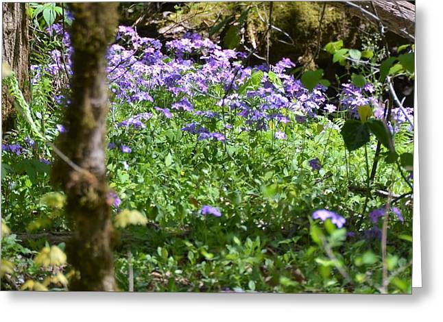 Wild Flowers On A Hike Greeting Card