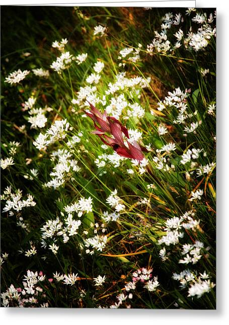 Spring Scenes Greeting Cards - Wild Flowers Greeting Card by Stylianos Kleanthous
