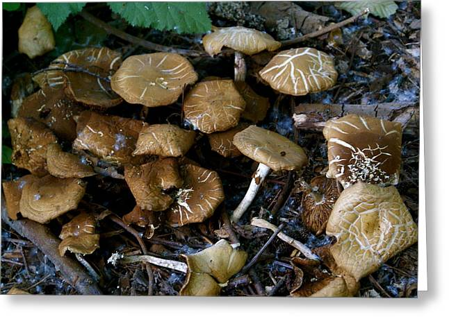 Wild Forest Mushroom Patch Greeting Card by Sonja Anderson