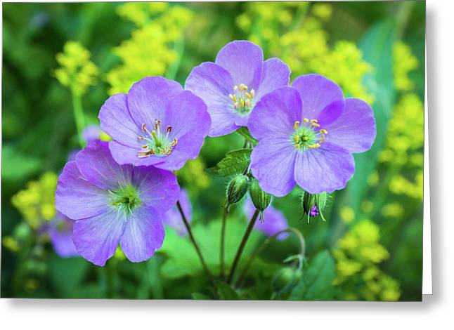 Wild Geranium Family Portrait Greeting Card