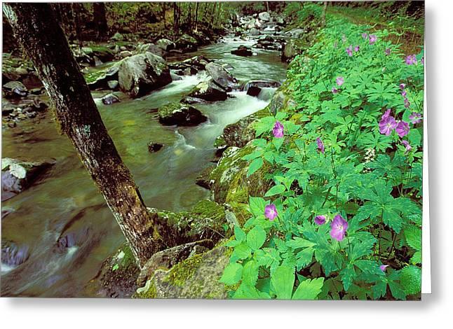 Wild Geraniums On Bradley Fork Greeting Card by Alan Lenk