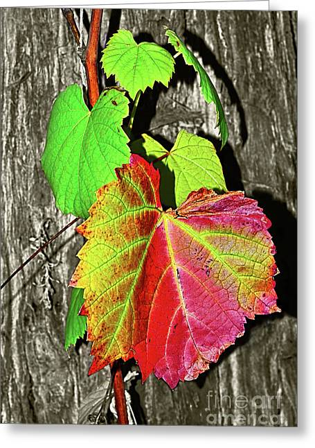 Greeting Card featuring the photograph Wild Grape Vine By Kaye Menner by Kaye Menner