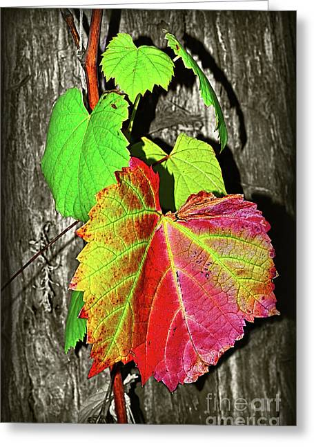 Wild Grape Vine II By Kaye Menner Greeting Card
