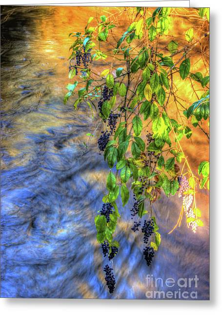 Wild Grapes Greeting Card