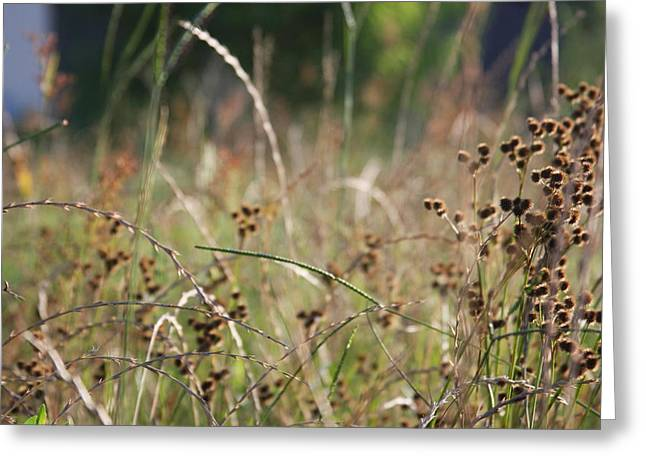Wild Grass And Burrs Greeting Card by Jonathan Kotinek