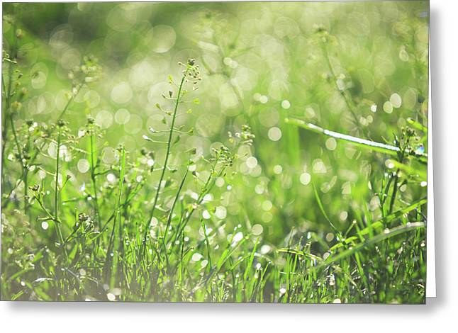 Wild Grass Voices. Green World Greeting Card by Jenny Rainbow
