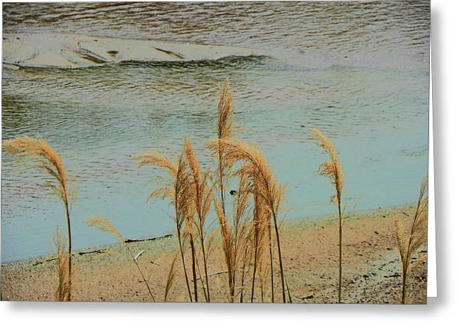 Sand Patterns Greeting Cards - Wild Grasses at Rivers Edge Greeting Card by Lenore Senior