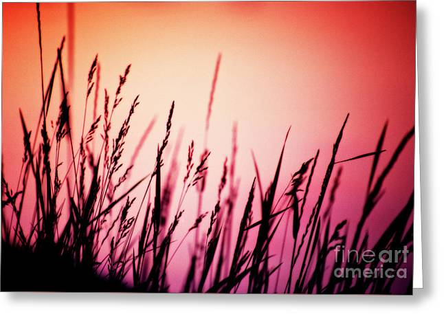 Greeting Card featuring the photograph Wild Grasses by Scott Kemper